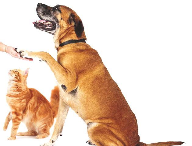 prodotti per animali naturali
